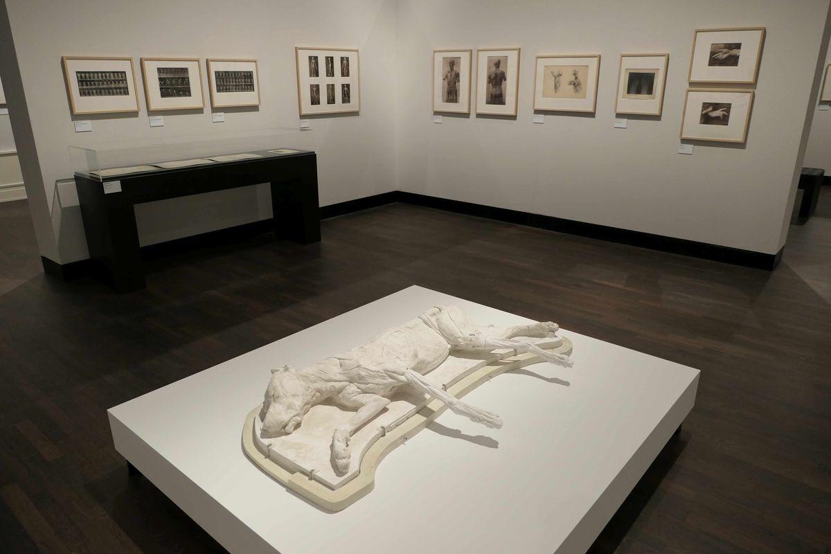 Ausstellungsdetails, im Vordergrund eine weiße Plastik eines liegenden Hundes, im Hintergrund Hängung, (c) Staatliche Museen zu Berlin, Kunstbibliothek / August Haverkamp